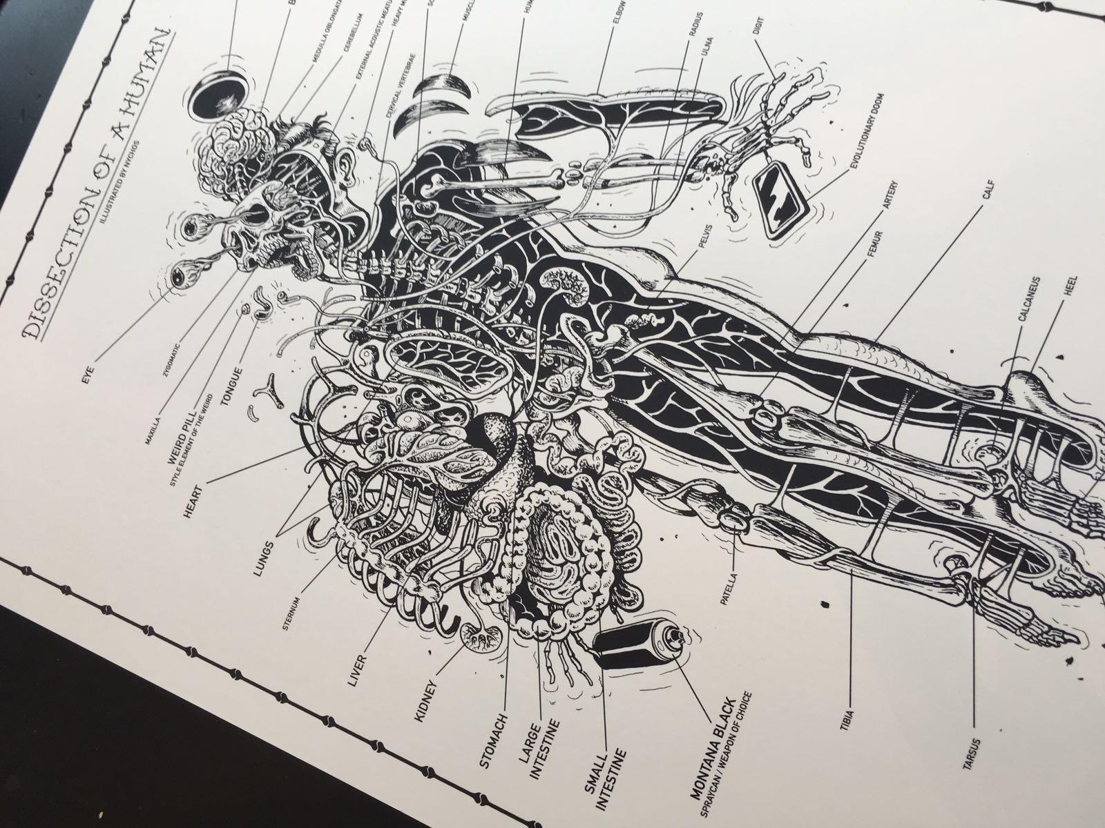 anatomysheet5_02