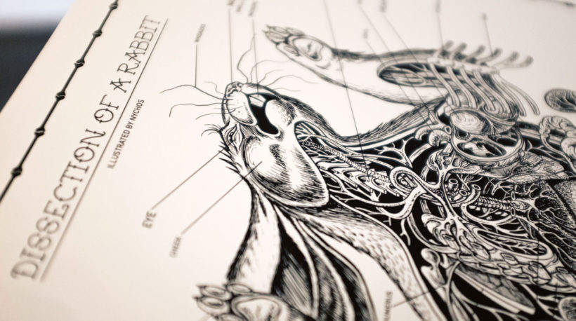 Out Now The Dissection Of A Rabbit Anatomy Sheet No6