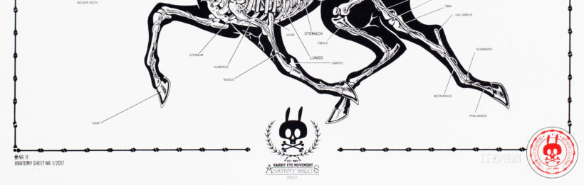 Our Anatomy Sheets Are Back In A New Series Rabbiteyemovement