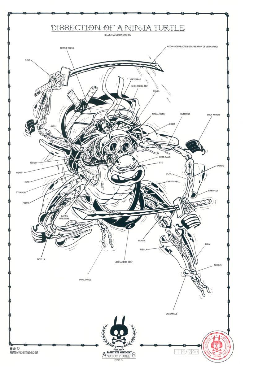 Exelent Rabbit Heart Anatomy Collection - Human Anatomy Images ...