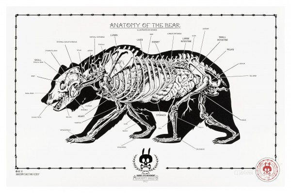 ANATOMY OF THE BEAR: ANATOMY SHEET NO.14