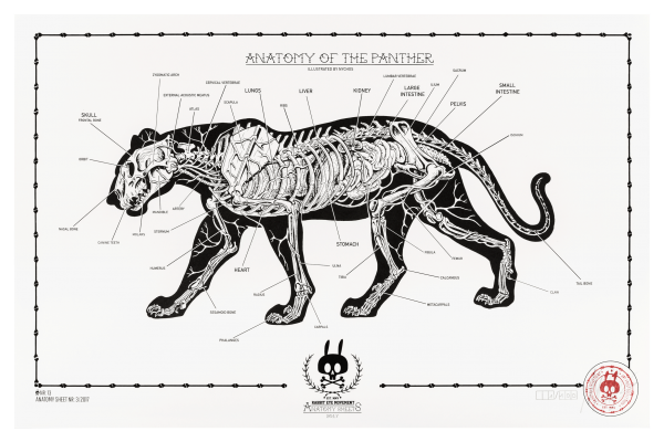 ANATOMY OF THE PANTHER: ANATOMY SHEET NO.13
