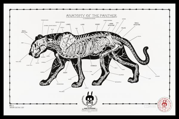 Anatomy Of The Panther Anatomy Sheet No13 Prints Rabbit Eye