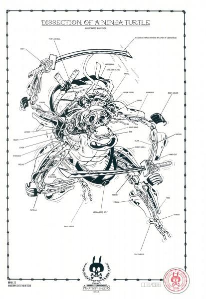 DISSECTION OF NINJA TURTLE: ANATOMY SHEET NO. 22
