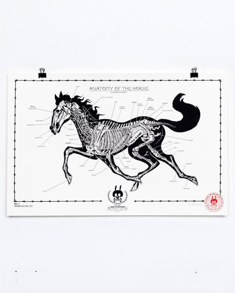 ANATOMY OF THE HORSE - ANATOMY SHEET NO.11