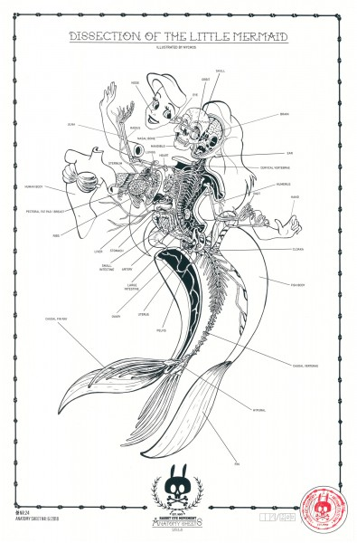 DISSECTION OF THE LITTLE MERMAID - ANATOMY SHEET NO. 24