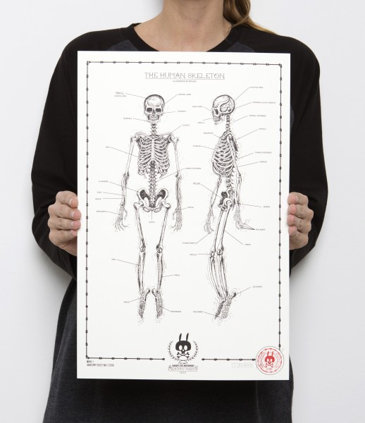 THE HUMAN SKELETON - Anatomy Sheet No.1
