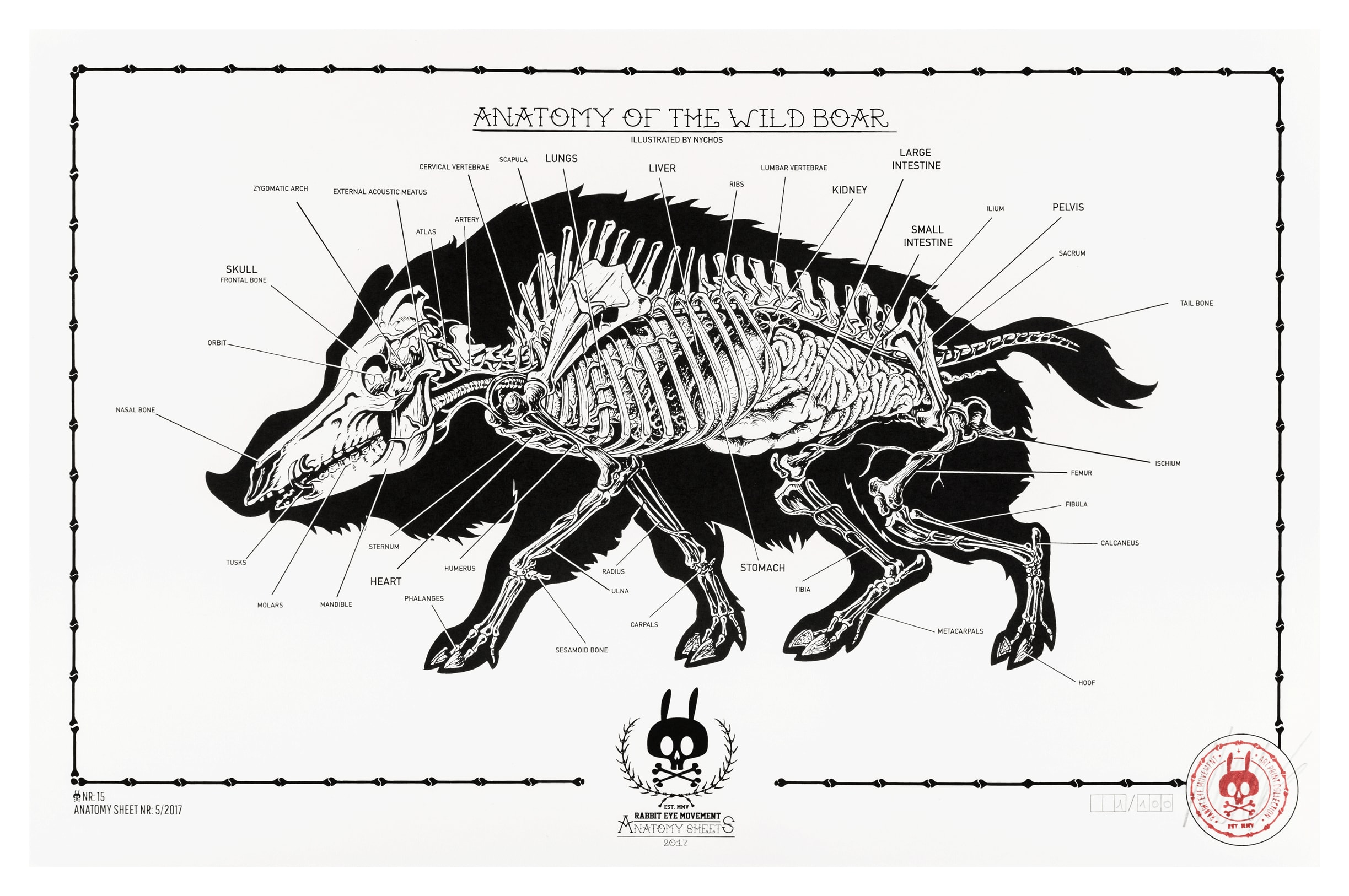 ANATOMY OF THE WILD BOAR: ANATOMY SHEET NO.15 | Prints | Rabbit Eye ...