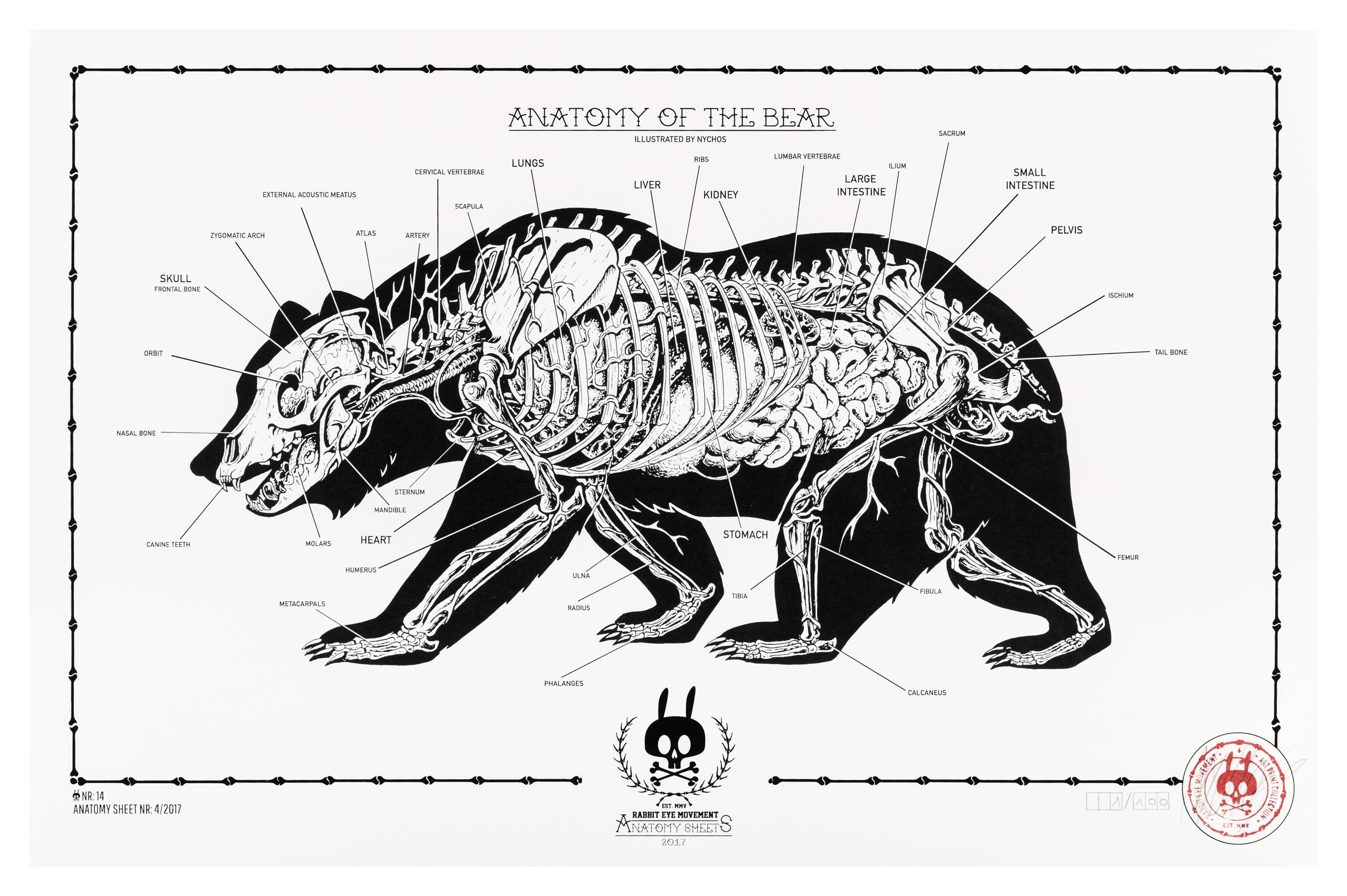 ANATOMY OF THE BEAR: ANATOMY SHEET NO.14 | Prints | Rabbit Eye ...