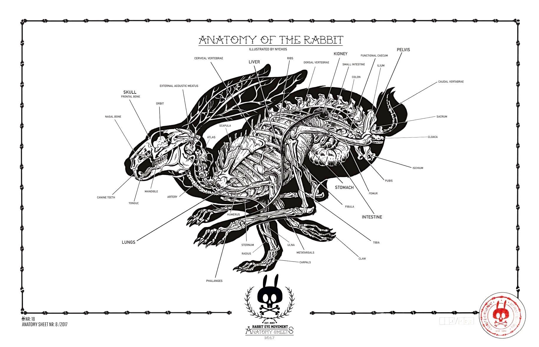 ANATOMY OF THE RABBIT: ANATOMY SHEET NO. 18 | Prints | Rabbit Eye ...
