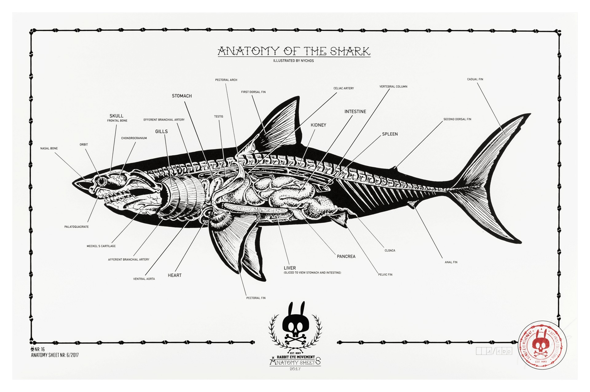 anatomy of the shark  anatomy sheet no  16