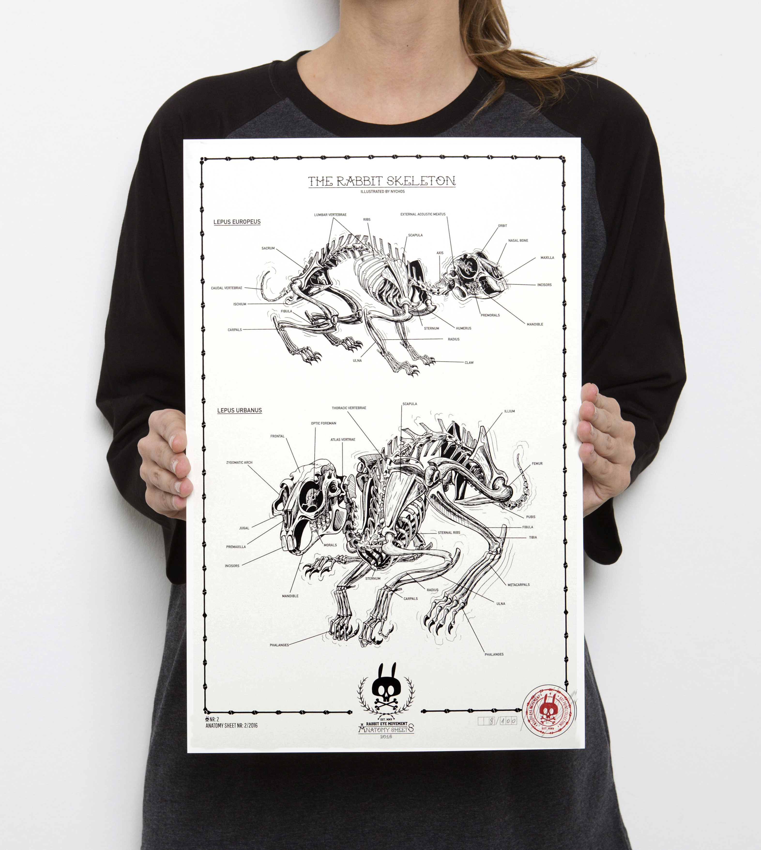The Rabbit Skeleton Anatomy Sheet No 2 Prints Rabbit Eye