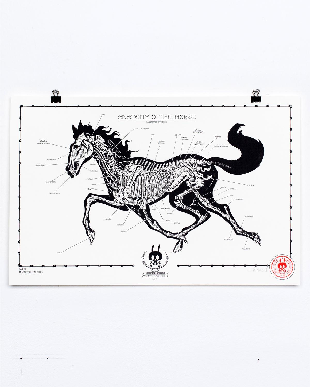 Berühmt Horse Intestine Anatomy Fotos - Menschliche Anatomie Bilder ...