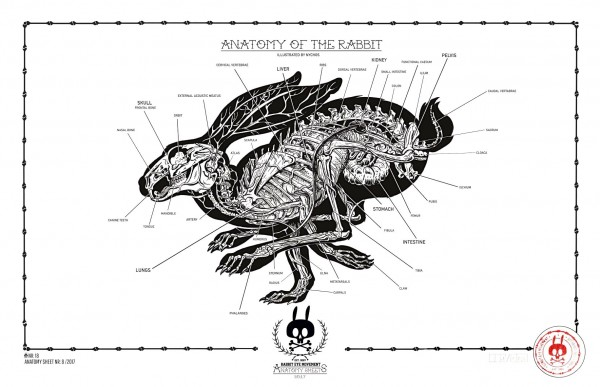 ANATOMY OF THE RABBIT: ANATOMY SHEET NO. 18